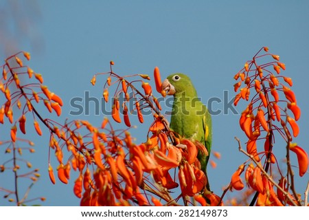 bird and flowers - stock photo