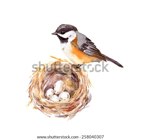 Bird at nest with eggs. Watercolor illustration - stock photo