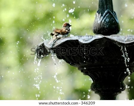 Bird bath, Madison Square, Manhattan - stock photo