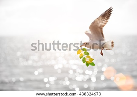 bird carrying leaf branch for hope land - stock photo