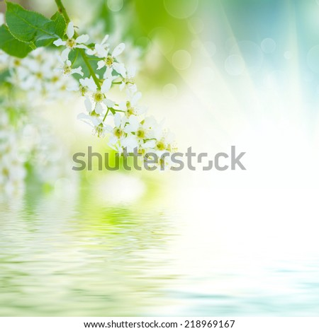 Bird-cherry tree flowers against the blue sky with water reflection, natural floral background - stock photo