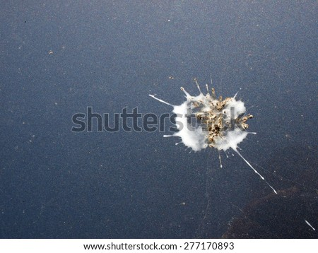 Bird droppings splash on blue car body surface - stock photo