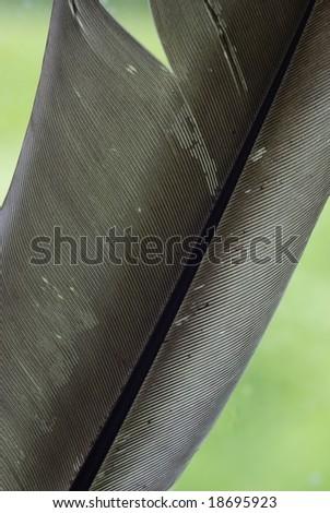 Bird feather - stock photo