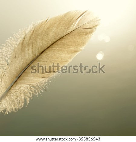bird feather one bright abstract nature background - stock photo