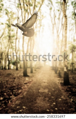bird flying in woodland for background - stock photo