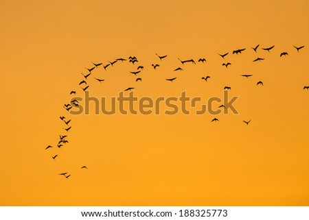 Bird flying to the nest and evening light. - stock photo