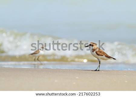 Bird hunting on the water. - stock photo