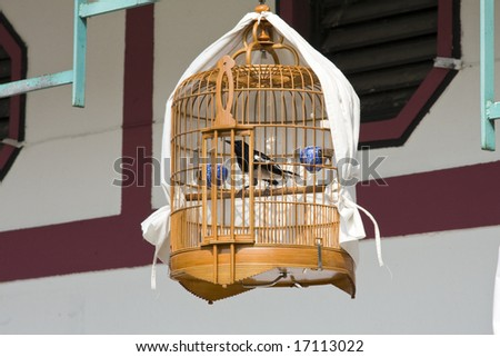 Bird in cage for sale at bird market - stock photo