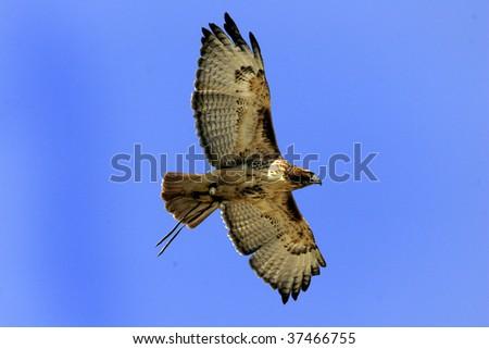 Bird in flight - stock photo