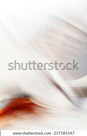 bird in flight, abstract photo in motion, creative image - stock photo
