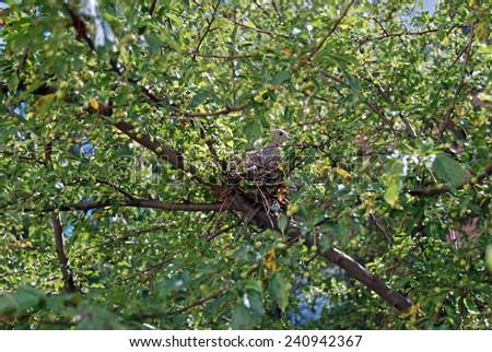 Bird in nest - stock photo