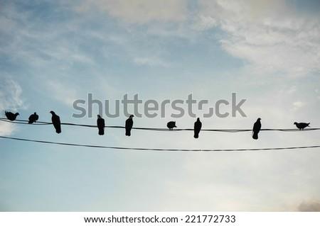 Bird in silhouette - stock photo