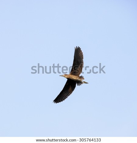bird in sky - stock photo