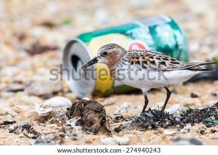 Bird looking food in rubbish - stock photo