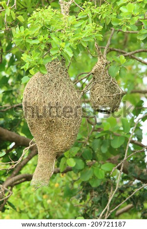 bird nest on tree - stock photo