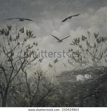 Bird nest with eggs in the tree. - stock photo