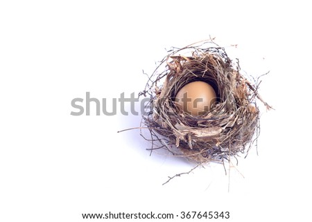 Bird nest with eggs on white background - stock photo