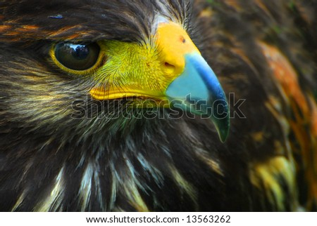 Bird of prey background - stock photo