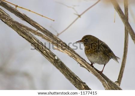 bird on a tree - stock photo