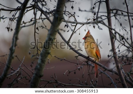 Bird on a Tree Branch - stock photo