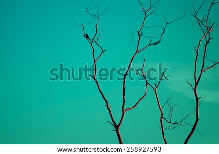 Bird on dry wood with blue sky in vintage color style - stock photo