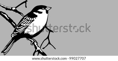 bird on gray background - stock photo