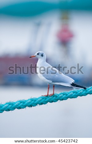 Bird on rope - stock photo