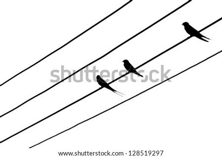 Bird on the electric wires. Isolated on white background - stock photo