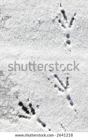 bird´s footsteps on snow - stock photo