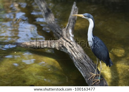 Bird sitting on a log in a pond - stock photo