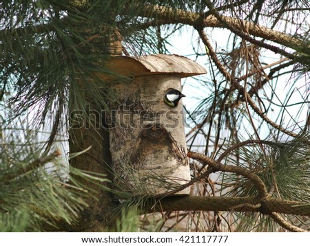 bird tit and birdhouse on tree background - stock photo