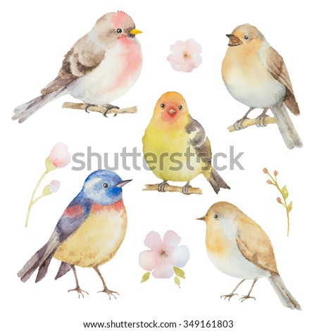 Bird watercolor set. Hand painted illustration on white background. Elements for design of congratulatory cards, invitations, business cards and more. - stock photo
