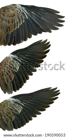 Bird wings isolated on white background - stock photo