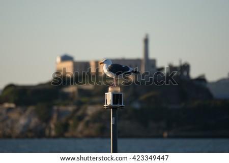 Bird with Alcatraz Prison at Pier 39, San Francisco, USA - stock photo