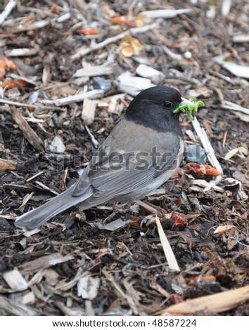 Bird with caterpillars - stock photo