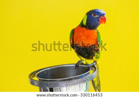 bird with food tray on yellow background, eye focus. - stock photo