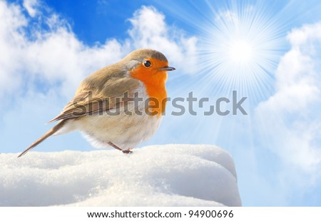 Birdie  (European Robin - Erithacus rubecula) on a snowy roof.  Winter sunny day concept. - stock photo