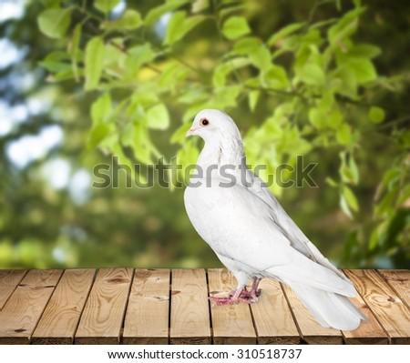 Birds. - stock photo