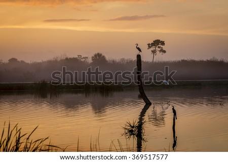 Birds at Sunrise in a Florida Wetland - stock photo