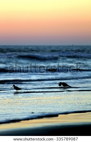 Birds at sunset in the water at a beach. - stock photo