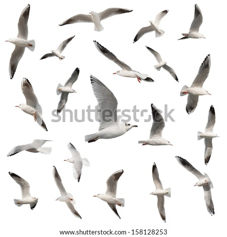 birds collection isolated on white - stock photo