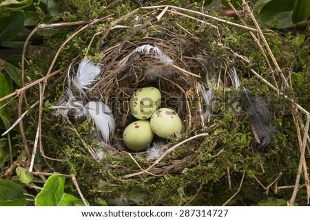 Birds eggs in a small nest - stock photo