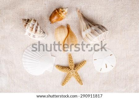 Birds Eye View of Seashells Over Textured White Background - stock photo