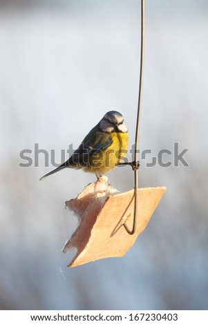 Birds feeding in cold winter morning - stock photo