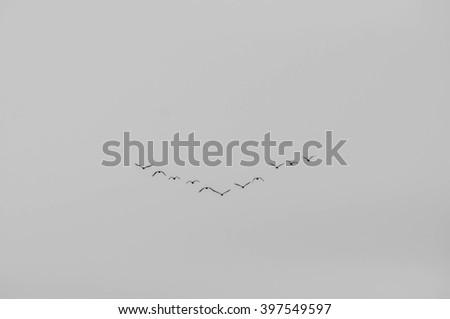 Birds fly as a group - stock photo