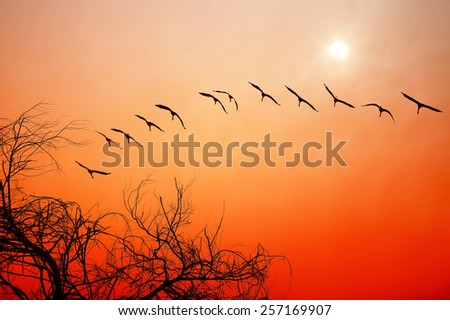Birds flying at red sunset. Migratory birds. - stock photo