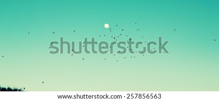 birds flying over a heavenly blue sky - stock photo