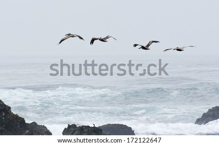 Birds flying over the waves and through the fog on the California coast - stock photo