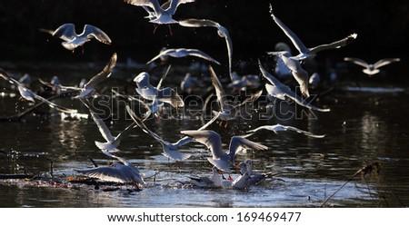 birds in flight - stock photo