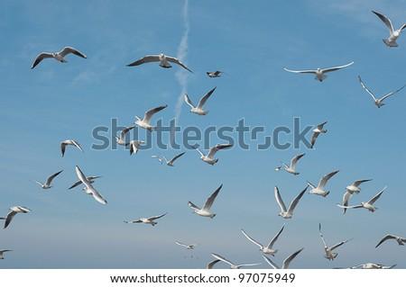 birds in the blue sky - stock photo